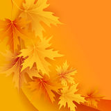Autumn maples falling leaves background Royalty Free Stock Photo