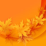 Autumn maples falling leaves background Stock Photos