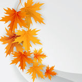 Autumn maples falling leaves background Stock Image