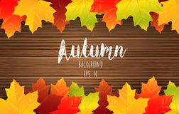 Autumn maples leaves on wooden background Stock Photography