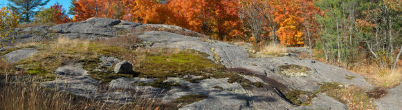 Autumn maples in rocky Canadian Shield Royalty Free Stock Photography