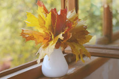 Autumn mapple leaves bunch Royalty Free Stock Image