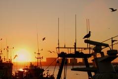 Autumn marine sunset Royalty Free Stock Images