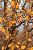 Autumn Marked Autumn Envied imagem de stock royalty free
