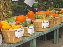 Autumn Market royalty free stock images