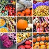 Autumn market collage Royalty Free Stock Photo