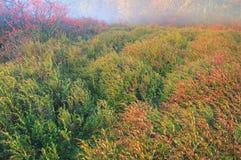 Autumn Marsh Royalty Free Stock Photo