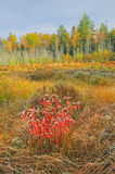 Autumn Marsh Stock Image