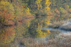 Autumn Marsh Royalty Free Stock Photography