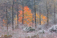 Autumn Marsh with Snow Stock Photography