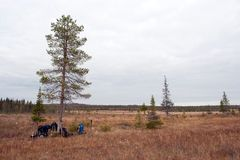 Autumn Marsh in Taiga Forest and Backpacks Stock Photography