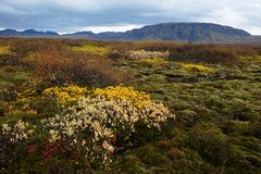Autumn Meadow Stock Afbeeldingen