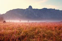 Autumn Meadow Lizenzfreie Stockbilder