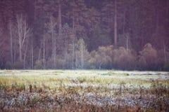 Autumn Meadow Lizenzfreies Stockfoto