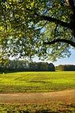 Autumn Meadow Fotografía de archivo libre de regalías