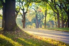 Autumn Meadow Foto de archivo libre de regalías