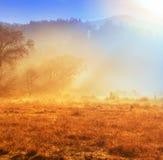 Autumn Meadow Imágenes de archivo libres de regalías