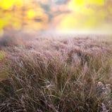 Autumn Meadow Fotos de archivo