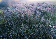 Autumn Meadow Stock Foto's