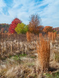 Autumn Meadow Royaltyfri Foto
