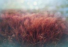 Autumn Meadow Royalty-vrije Stock Foto