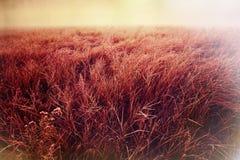Autumn Meadow Royalty-vrije Stock Afbeelding