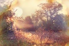 Autumn Meadow Royalty-vrije Stock Fotografie