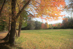 Autumn Meadow Photo stock