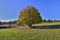 Autumn meadow with big tree. royalty free stock photo