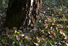 Autumn meadow royalty free stock photos