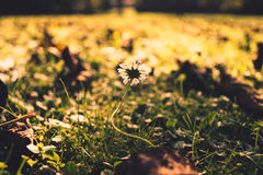 Autumn meadow Royalty Free Stock Image