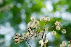 Autumn meadow flowers . Royalty Free Stock Photography