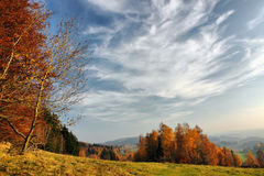 Autumn meadow and forest. With beautiful sky Royalty Free Stock Image