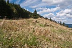 Autumn meadow and forest around on Priekova pass above Zuberec. Autumn Skorusinske vrchy mountains (Priekova pass) near Zuberec in Slovakia with meadow, trees on stock photography
