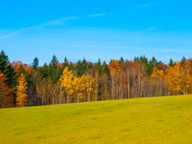 Autumn meadow and forest Stock Image