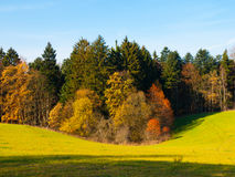 Autumn meadow and forest Royalty Free Stock Photo