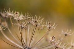 Autumn meadow grass. On sunlight Royalty Free Stock Photos