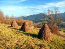 Autumn meadow with haystacks Royalty Free Stock Image