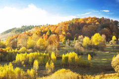 Autumn meadow landscape with colorful trees in the fall light Stock Photography