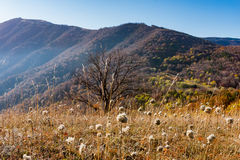 Autumn meadow in mountains Stock Photography