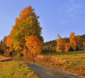 Autumn meadow, road and trees Stock Images