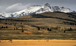 Autumn Meadow, Snowy Peaks, Yellowstone National Park, Royalty Free Stock Photography
