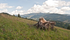 Autumn meadow with stump and Tatry mountains panorama Royalty Free Stock Photos
