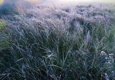 Autumn meadow Stock Photos