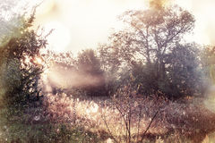 Autumn meadow Stock Images