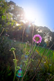 Autumn meadow sunset Stock Photography
