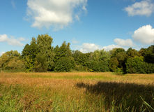 Autumn meadow under blue sky Royalty Free Stock Images