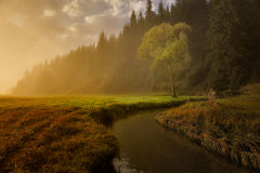 Autumn meadows. Sunrise on meadows with a tree royalty free stock image