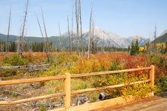Autumn meadows landscape stock image