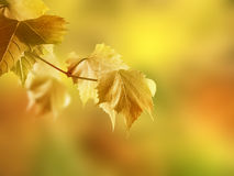 Autumn meditation Royalty Free Stock Photography